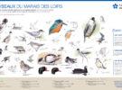 Panneau Oiseaux Observatoire Marais des Loirs