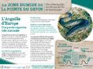 Panneau Anguille d'Europe